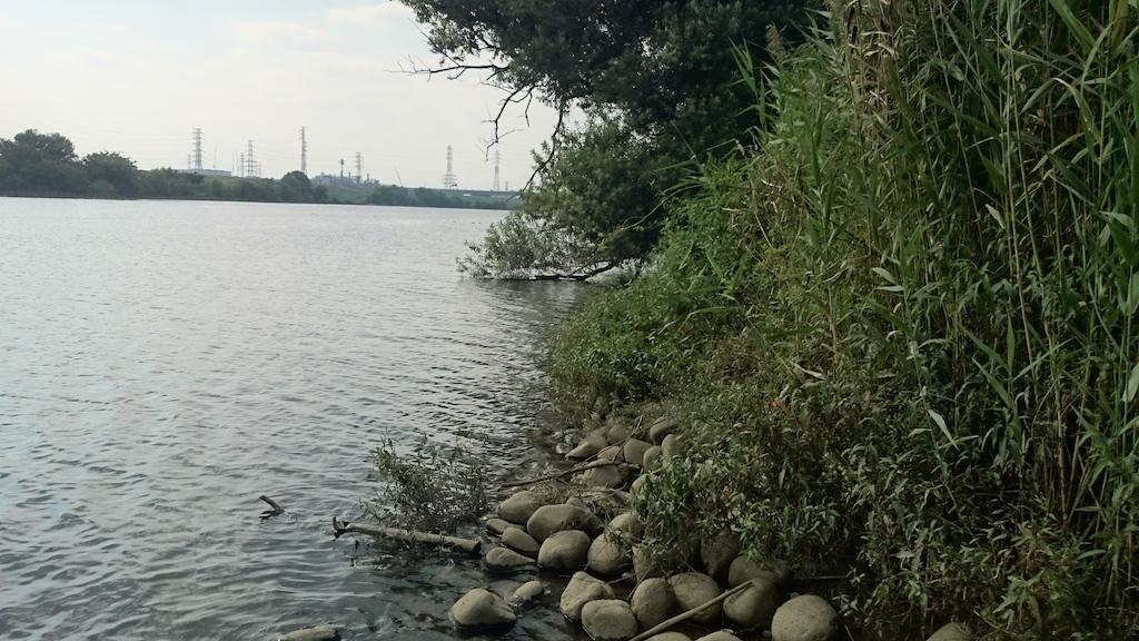 【@荒川】ブラックバスを釣りに笹目橋付近に行ってきました。