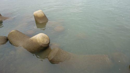 秋ヶ瀬水質