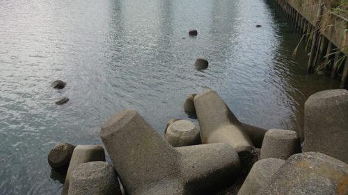 朝霞水門の先端側のテトラ帯