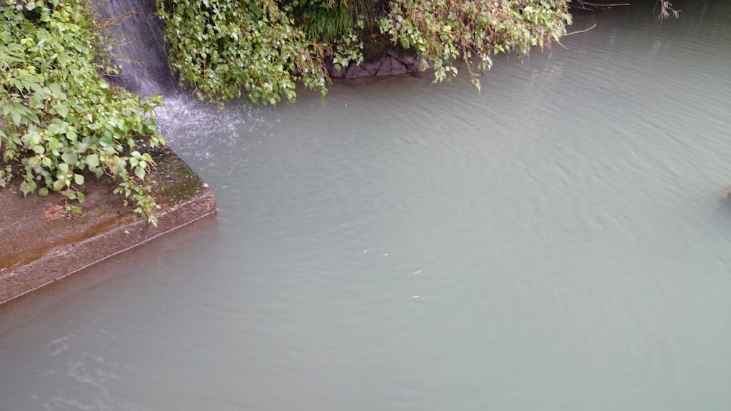 雨の影響で濁り気味の相模湖にて大物ブラックバス狙い☆7