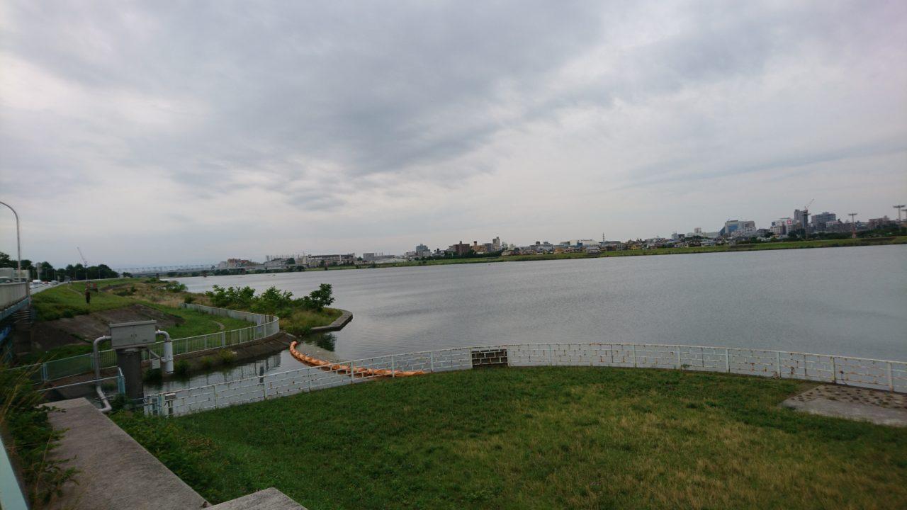 今年は調子が良いらしい多摩川@中野島〜稲田堤