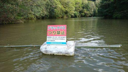 【本年、相模湖で初魚!】振替休日を利用して相模湖に行ってきました★