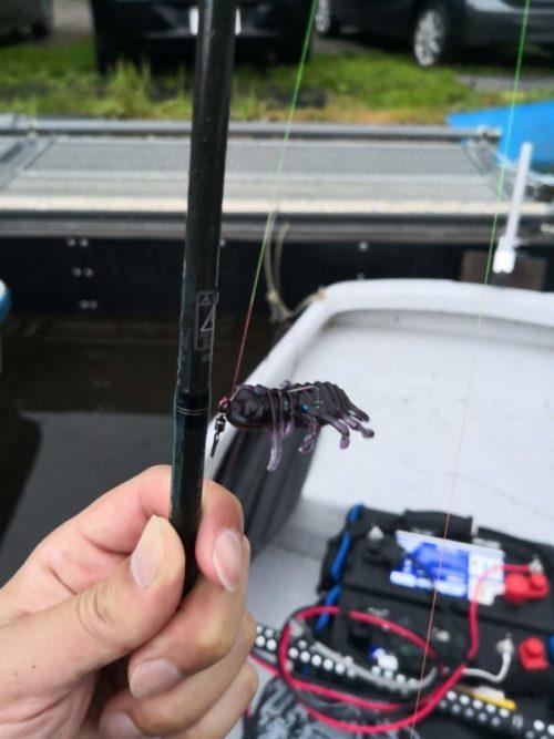 GW初日は相模湖でブラックバス!本湖北側にはフライがたくさん。